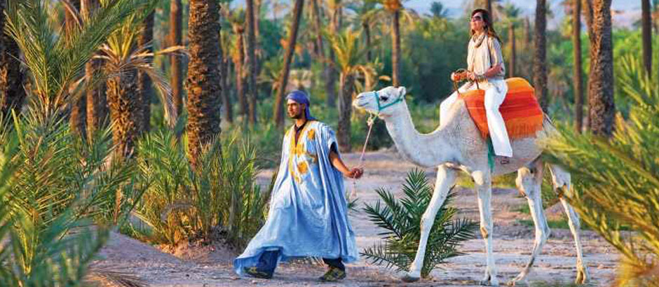 Marrakech Palm Grove Camel Ride